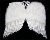"Angel Wings, 22"" White Feather"
